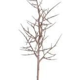 """Christusdornen-Zweig (Gleditsia triacanthos) """"Dried nature"""", 78cm - Sonderpreis"""