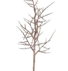 "Gleditsia triacanthos branch """"Dried nature"""" x9 78cm - special offer"