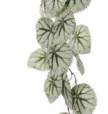 Begonia Rex (Koningsbegonia) hangend, met 18 bladeren (speciale coating), 111cm