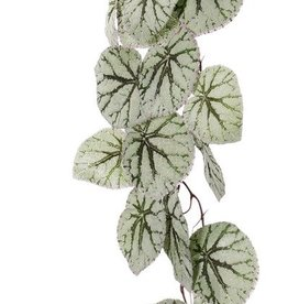 Begonia Rex, hanging, 18 leaves, (special coating), 111cm