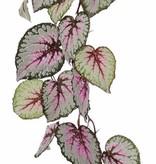Begonia Rex (Königsbegonie) hängend, mit 18 Blättern, (spezielle Beschichtung), 111cm