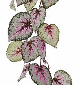 Begonia Rex, hanging, 18 lvs., (special coating), 111cm