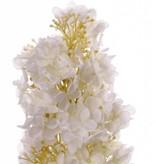 Hortensie paniculata mit 4 Blaettern, 81cm, Blume 20cm