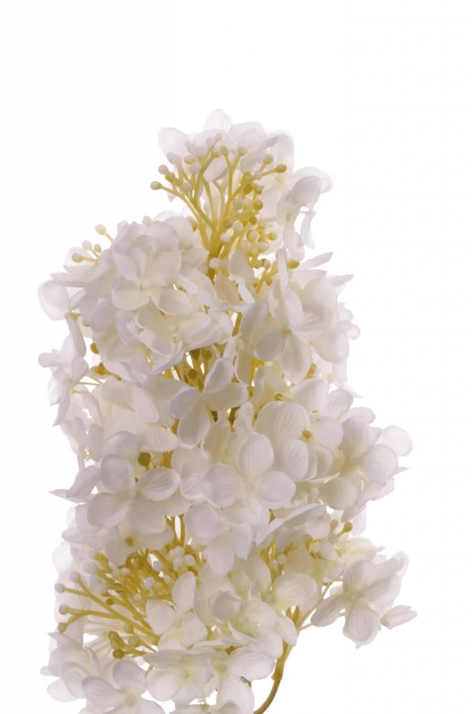 Hortensia paniculata,  4 hojas, coated stem 81cm, flor 20cm