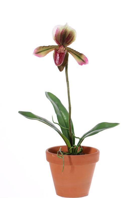 Frauenschuh (Paphiopedilum) mit 1 Blume und 3 Blättern, REALTOUCH, 40cm