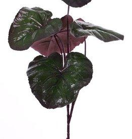 Ligularia dentata (Kruiskruid) met 5 bladeren (3*22cm&2*18cm), 86cm