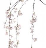 Kersenbloesemtak hangend 120cm