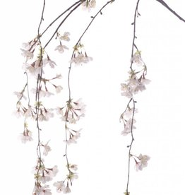Cherryblossombranch weeping 120cm