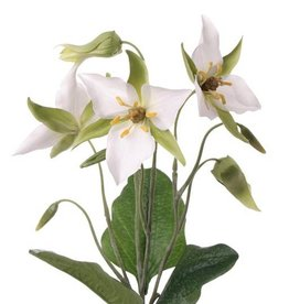 Waldlilie (Trillium) x3 Blumen, 5 Knospen, 3 Blaetter, 40cm