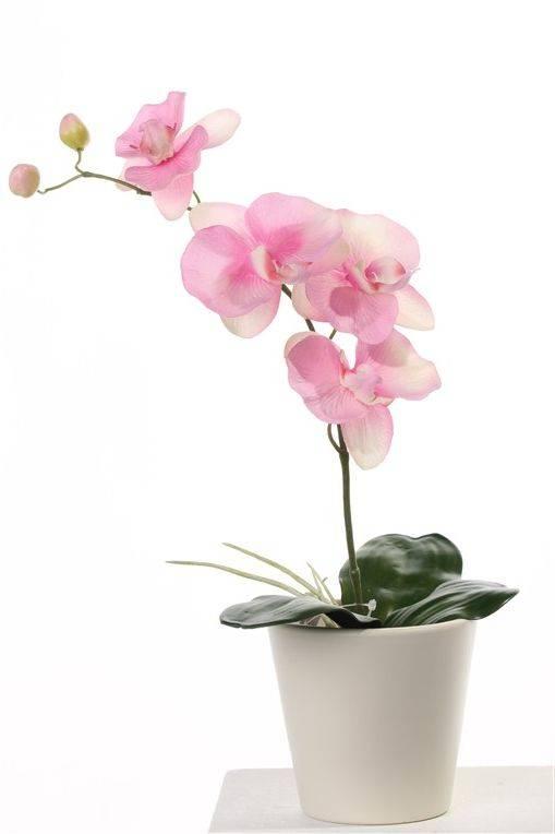 Orchidee mit 4 Blumen, 2 Knospen und 3 Blätter & Würzeln, 44cm, ohne Topf