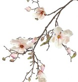 Magnolia x4, 22buds, 107cm