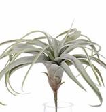 Tillandsiabush large, H. 30cm / Ø 35cm, 30 blad