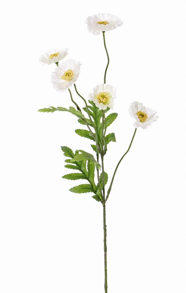 Amapola (Papaver Somniferum), 5 flores (Ø 5cm), 4 hojas, 63cm