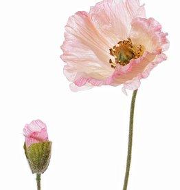 Mohnblume 'Shiny', (3 Lagen, Ø 12cm), 1 Knospe, beflockt, 2 Blätter, 65cm
