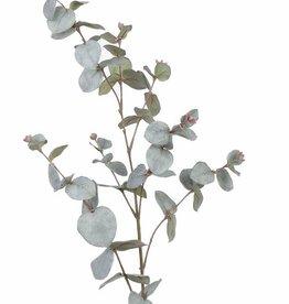 Eucalyptustak (Gomboom) met 60 blad (30 bladparen) & 8 bladknoppen, 86 cm