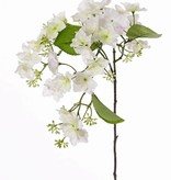 Hydrangea macrophylla with 31 flowers, 4 lvs., 15 clusters of buds, 96cm
