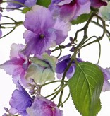 Hydrangea macrophylla (Hortensie) mit 31 Blüten, 4 Blättern, 15 Knospen-Blütenstände, 96cm