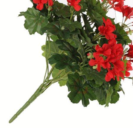Geranium (Austrian), 40cm