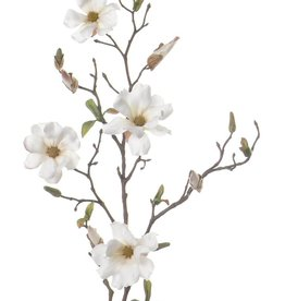 Magnolia, 75cm,  4 flores con capullos