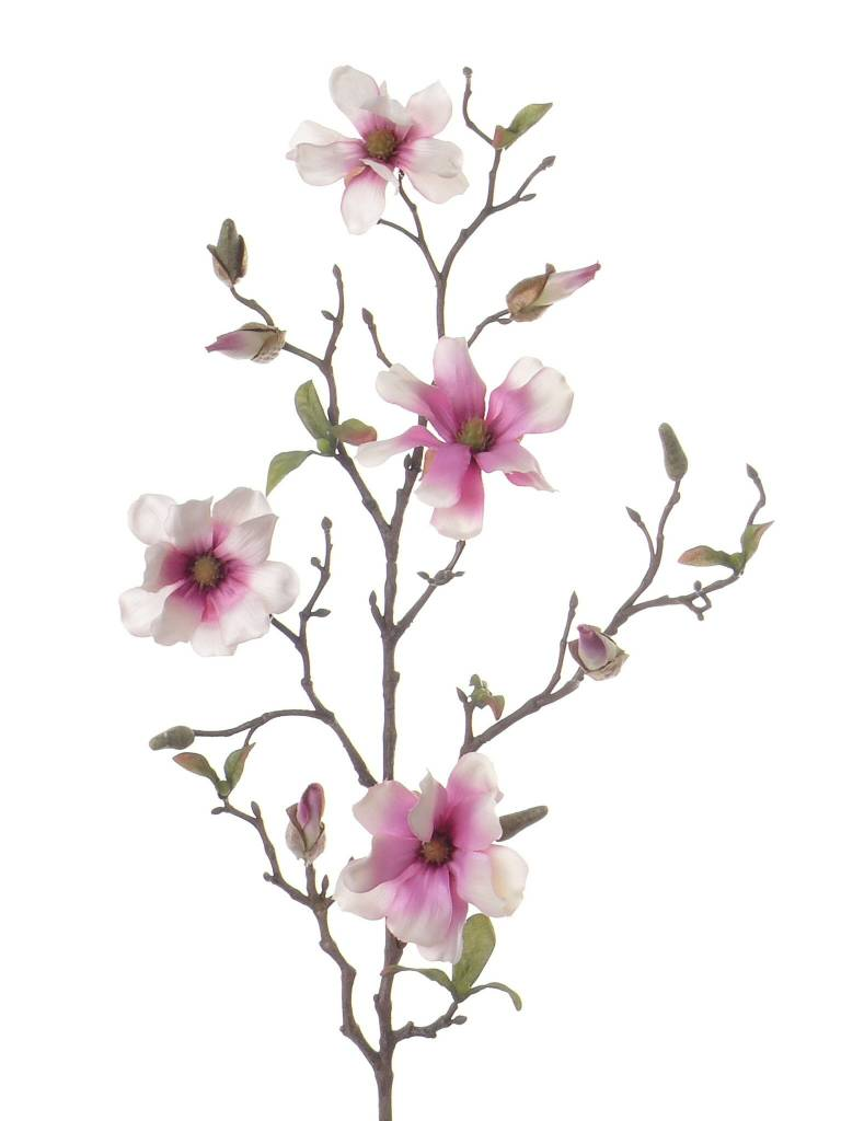 Magnolia, 75cm,  4 flowers with buds