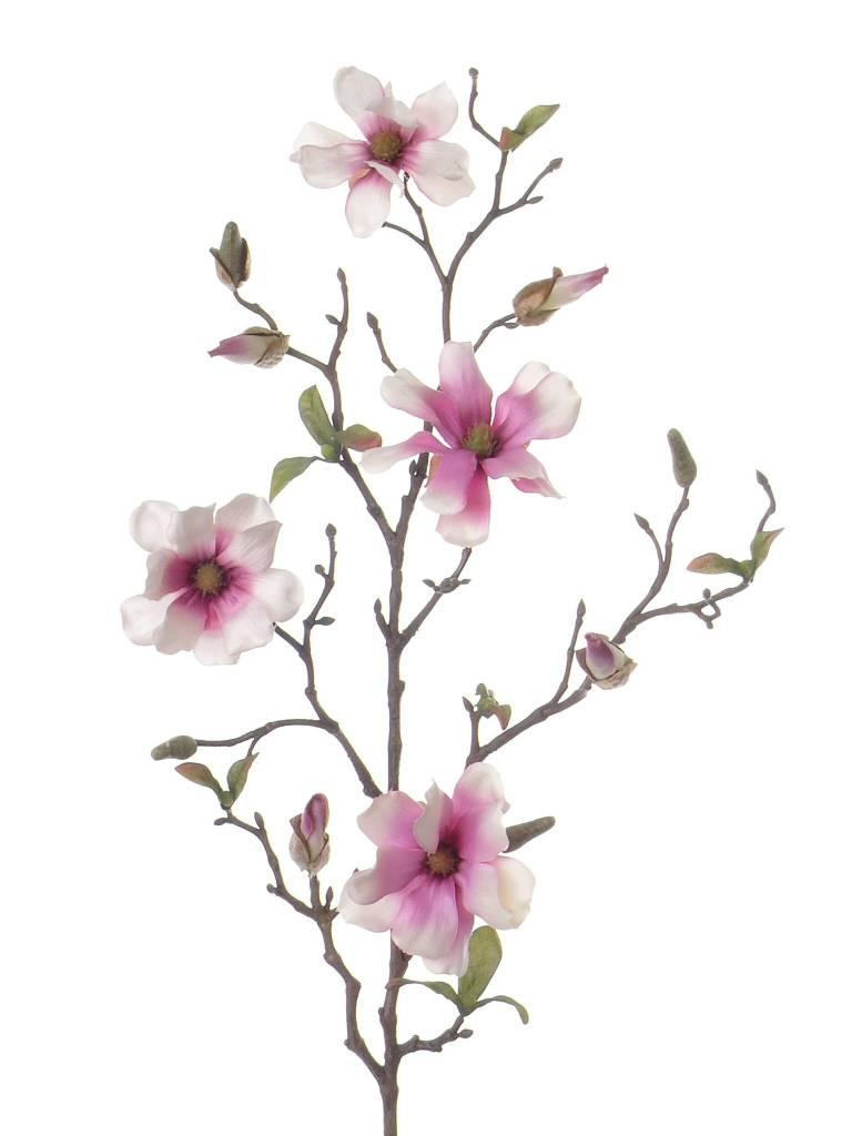 Magnoliatak fijn 78cm 4fl, buds