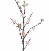Bloesemtak 'Quince' x14blm, x27knp, 86cm