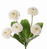 Bellis perennis (Madeliefje), 5 bloemen (Ø 4.5cm), 7 blad, 24cm