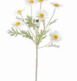 Margeriten (Leucanthemum) 7 Blumen (Ø 5cm), 1 Knospe, 7 Blätter, beflockt, 57cm