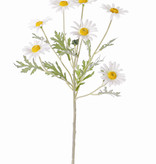 Margriet (Leucanthemum) 7 bloemen (Ø 5cm), 1 knop & 7 blad, flocked, 57cm