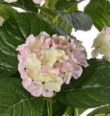 Hortensia met 5 grote bloemtrossen (x204 flrs) & 30 bladeren,36cm