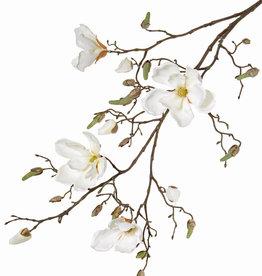 Magnolia tak met 4 vertakkingen, 22 knp, 107cm