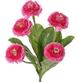 Bellis perennis (lawn daisy), 5 flowers (Ø 4.5cm), 7 lvs., 24 cm