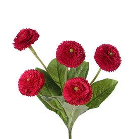 Bellis perennis (Chiribita), 5 flores (Ø 4.5cm), 7 hojas, 24 cm