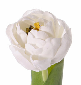 Tulipa 'Full Bloom'