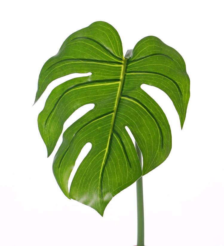"""Monsterablad (Gatenplant) """"Naturals"""" (PE), medium, ø20*25cm, 55cm"""