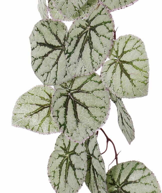 Begonia Rex colgante, 18 hojas, (capa especial), 111cm