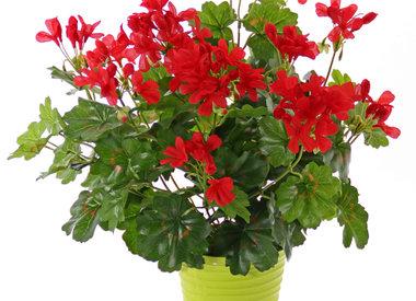 Blühende Kunstpflanzen