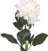 Dahlia x2, 1flower , Ø 12cm, 1 bud, 4 lvs, 75cm