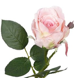 Rose Jessica, 32cm, Ø 6cm, 7 lvs.