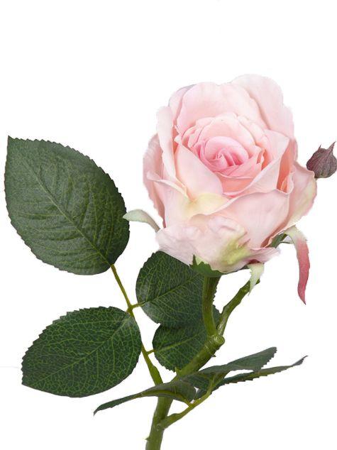 Roos Jessica, 7 bladeren,  32 cm, Ø 6cm