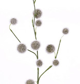 Allium (poliestireno) 'SummerBreeze' x3,  12 frutos (Ø 2,5 - 4cm),  80cm