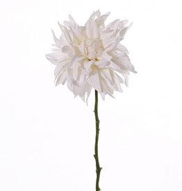 Dalia 'SummerBreeze', Ø 12cm, 53cm