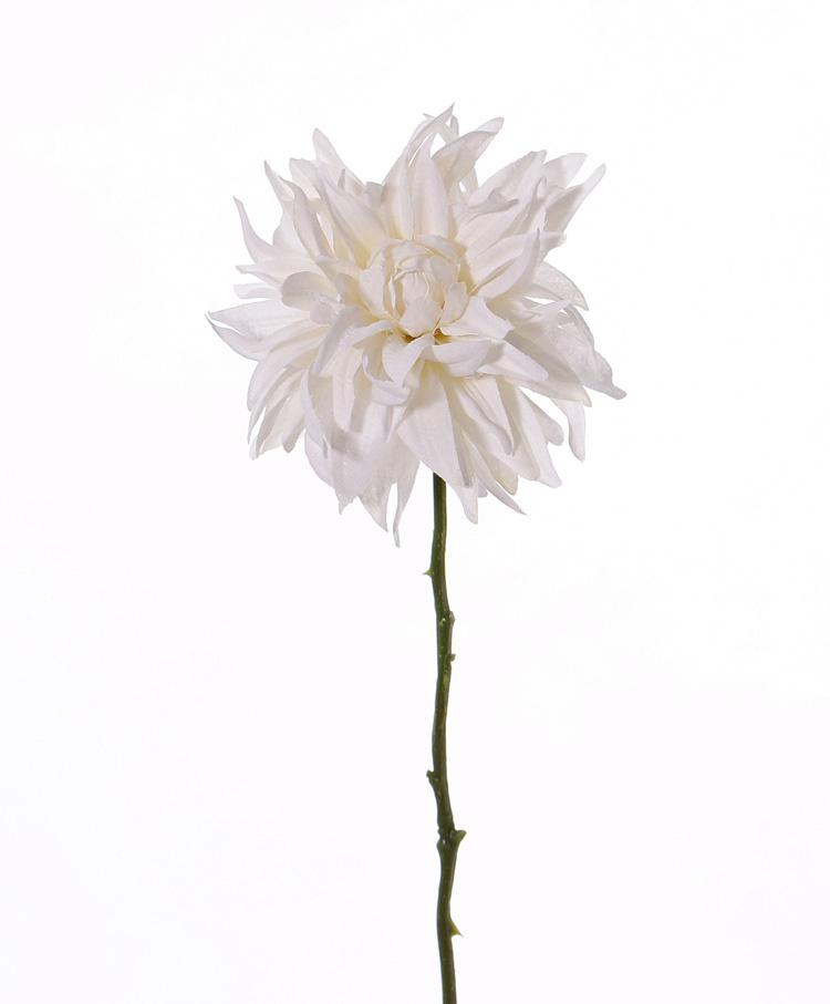 Dahlie 'SummerBreeze', Ø 12cm, 53cm