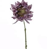 Sunflower 'SummerBreeze', Ø 12cm, 58cm