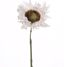 Girasol 'Summerbreeze', Ø 12cm, 58cm