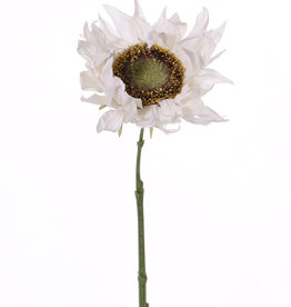 Zonnebloem 'SummerBreeze', Ø 12cm, 58cm