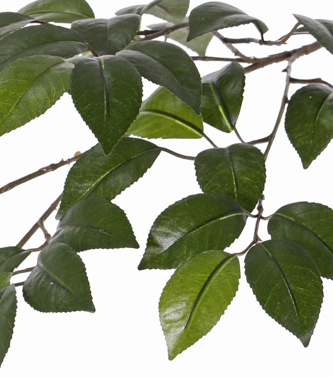 Camellia (Camelia) bladtak, 4 vertakkingen, 49 blad, 2tone groen