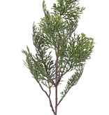 Cypress branch (Cupressus) 'Top Green', 13 leaves, 60cm