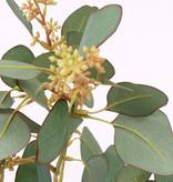 Eucalyptuszweig, 78 Blätter, blühend, 65cm - UV sicher