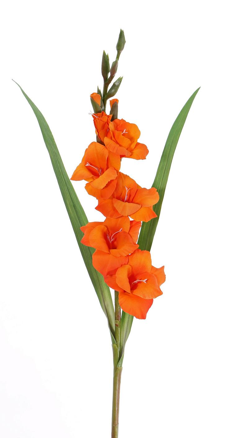 Gladiolo, 5 flores, 8 capullos & 2 hojas, 83cm